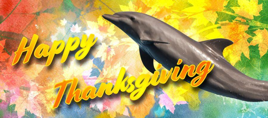 A Dolphin-tastic Thanksgiving Celebration