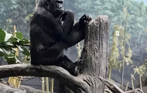 Zoos, Please do better